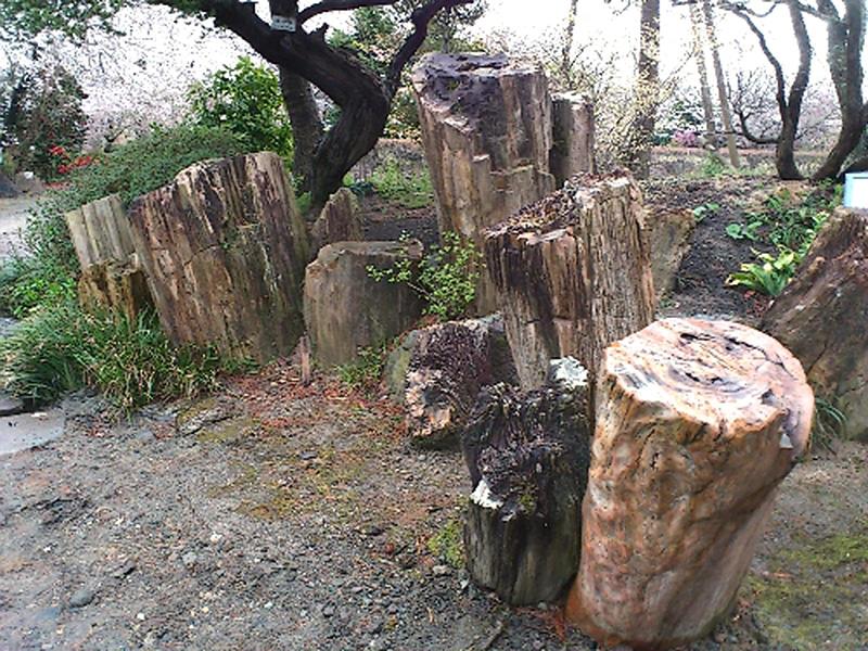 3. 珪化木