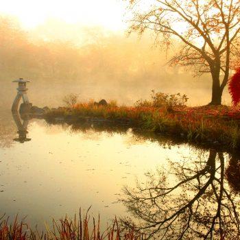 金賞:「晩秋の朝もや」撮影:伊藤留夫