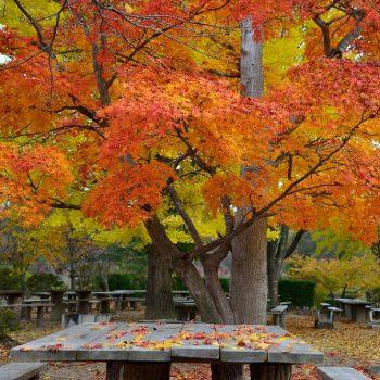 銅賞:「秋宴」撮影:小野長治