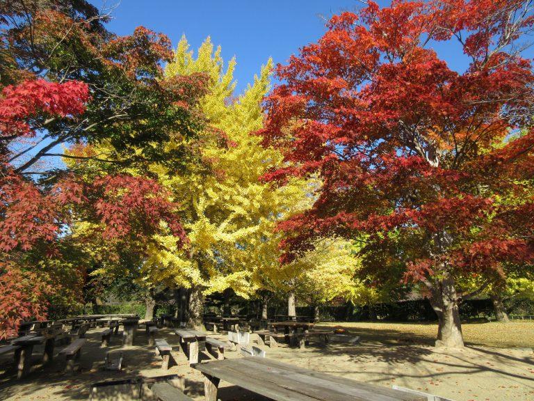 緑水苑 紅葉情報 11月5日現在