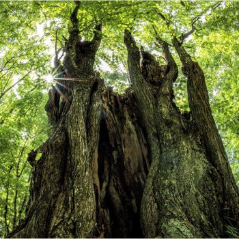金賞:巨木の春 撮影:鈴木洋