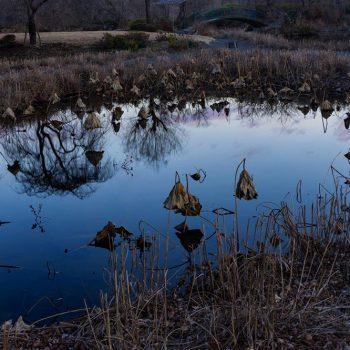 銅賞:静寂の刻 撮影:松木リツ子