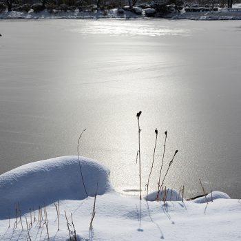 銅賞:冬の日差し 山口元広