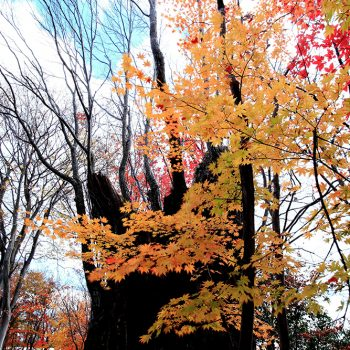 銅賞:古木の秋 入部守弘