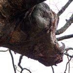 緑水苑賞:中條里子 牛の木